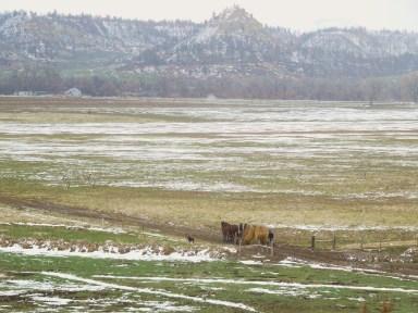 Hauling Hay Beside Tongue River